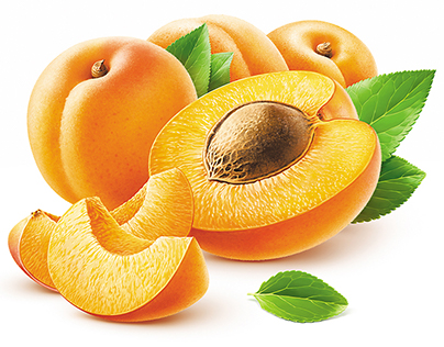 Apricot illustration