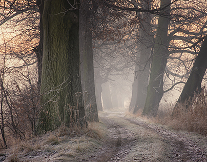 Misty oak pathway