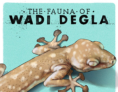 Illustrations of Wadi Degla Part 1: The Fauna
