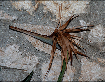 Sicily 2020 - Birds of paradise death...
