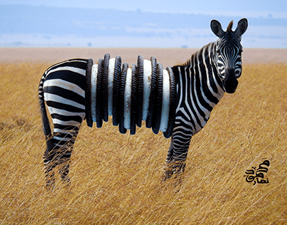 Zebra Oreo