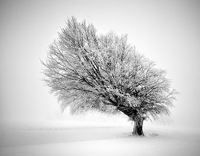 Frozen Life II