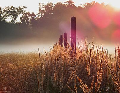 Mgła i łąka