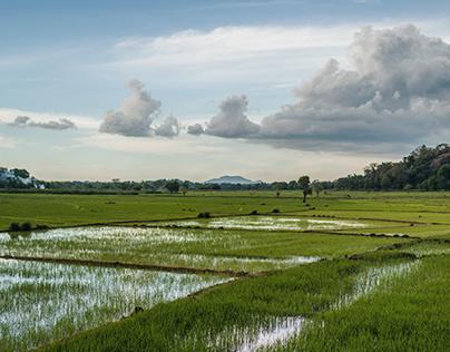 SRI LANKA // LANDSCAPE