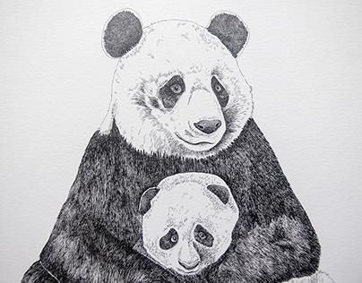 Panda bear (mummy and baby)