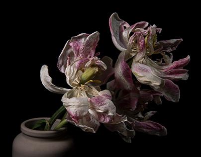 Dark Bouquets