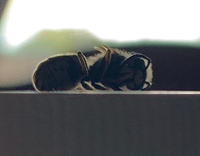 Sleeping wasp