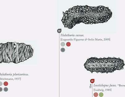Cocos Island Animalia Infographic