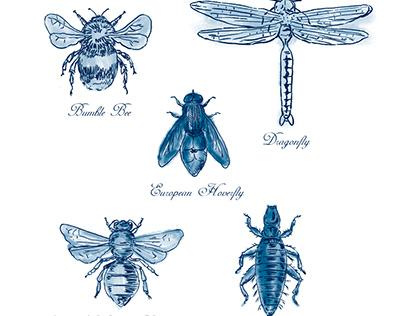Bumble Bee, European Hoverfly, Dragonfly, Hlalactid Bee
