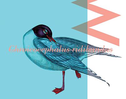 THOSE BIRDS SO BEAUTIFUL | BOOK