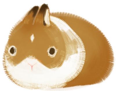 Mars, a dawrf dutch rabbit