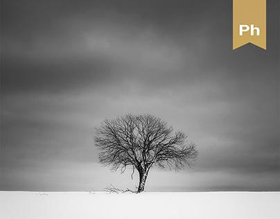 The Minimalism of Winter II