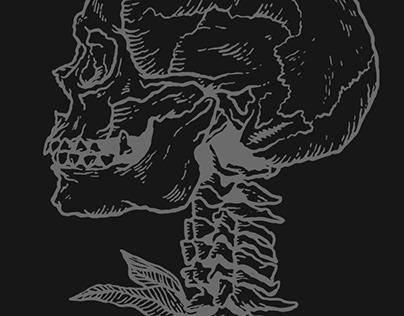 Cranium Vertebrae Botanica