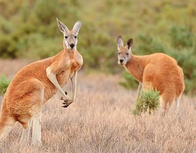 Авторский тур в Австралию