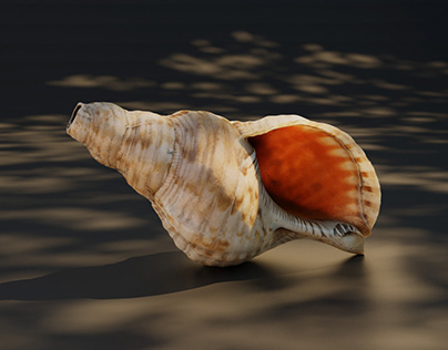 Sea shell 3-D scan