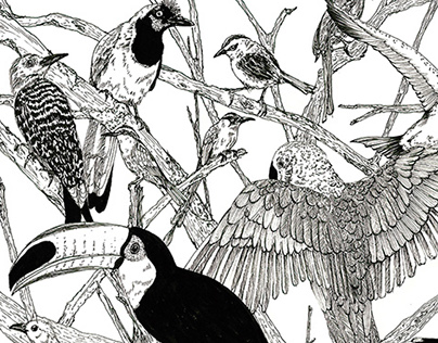 Aves de Colombia | Bird Illustration