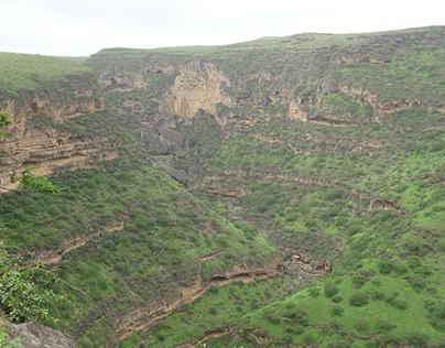 The tropical vegetation of the Salalah region in Oman