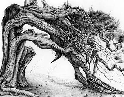 Juniper 1 - Tree 3