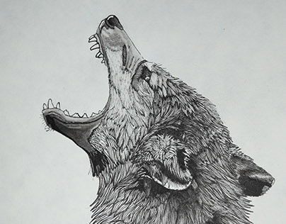 Lone Wolf Howling