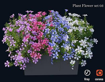 Plant Flower 03