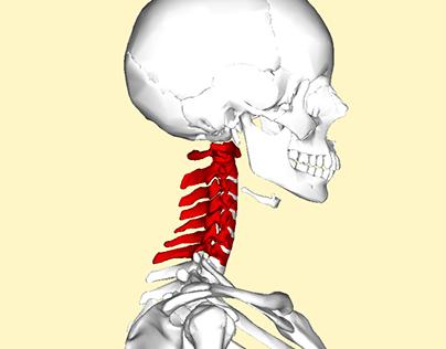 Cervical spondylosis: Symptoms, Causes and Treatment