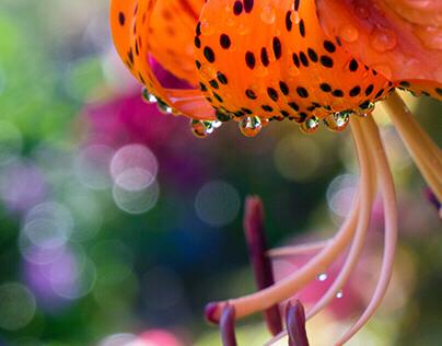 Sunstruck Floral Photographs