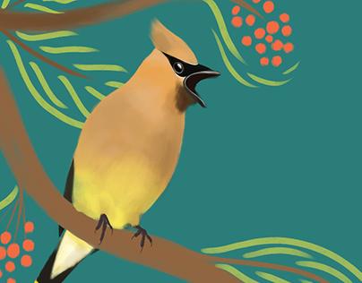Media Fauna — Illustrations