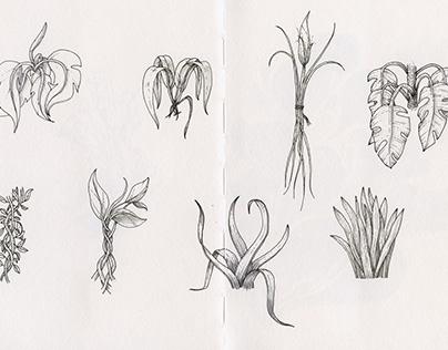 Imaginary Plant (spread one)
