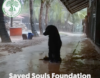Saved Souls Foundation Flood Appeal