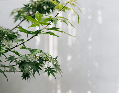 Ayus Botanical