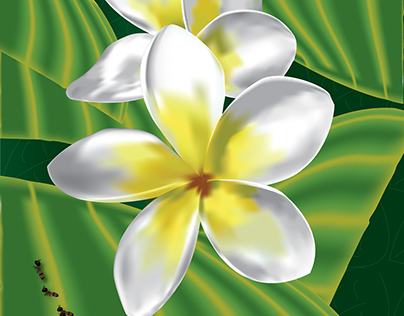 Illustrated Plumeria