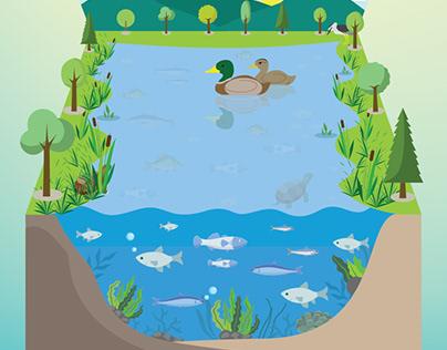 Wetlands   Nature's Hidden Treasure Poster