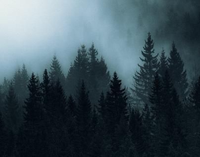 BLACK WOODS – Norway