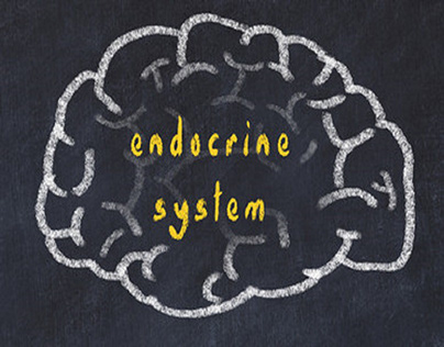 How Hormones Function within the Endocrine System