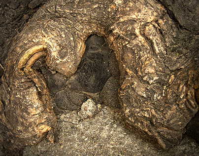 Tumors of trees