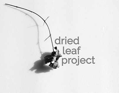 Dried Leaf Project