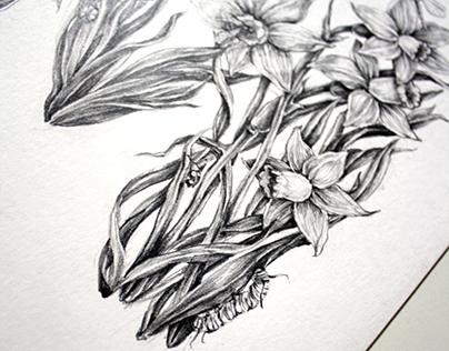Monogram Daffodils
