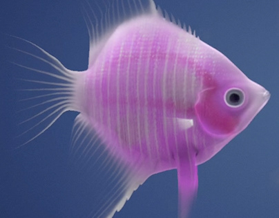 Angelfish Out Of Water