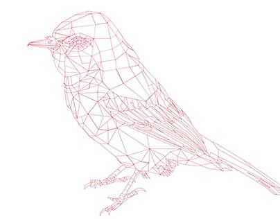 BIRD RENDER STUDY