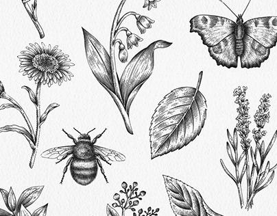 National Trust | Tisserand packaging illustrations
