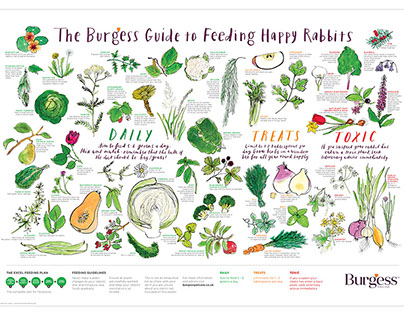 Burgess Guide to Feeding Happy Rabbits