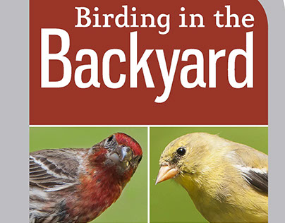 Birding in the Backyard