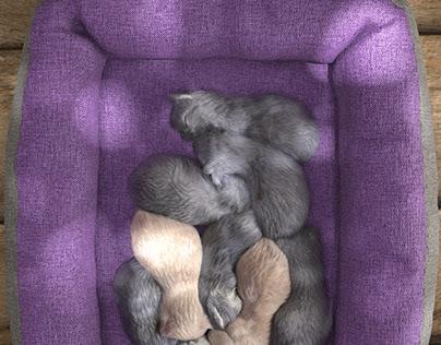 Box of cats - Making acquaintance with Ornatrix