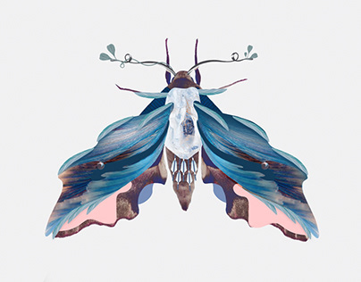 Moths illustrations