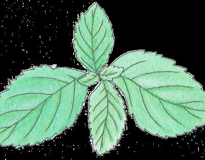 Botanical Illustrations // Illustration