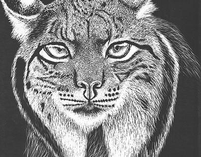 (Lynx pardinus)