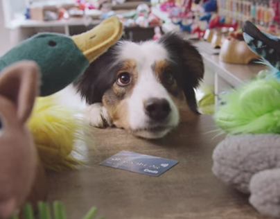 Pets with Credit
