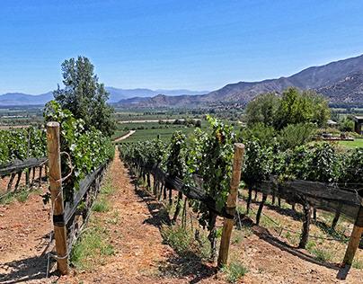 Vineyards, Colchagua, Chile