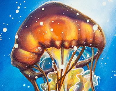 Jellyfish Study