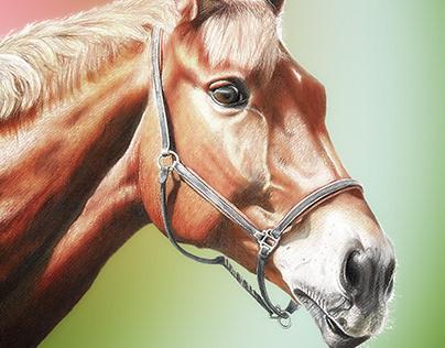 Horses 3 - Qnie 3 :)